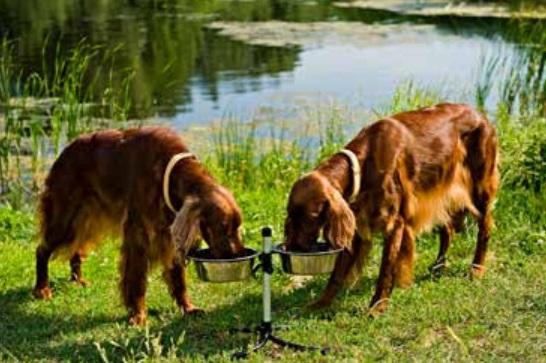 Stovas šunų dubenėliams  (su dubenėliais -2 x 2,8l)