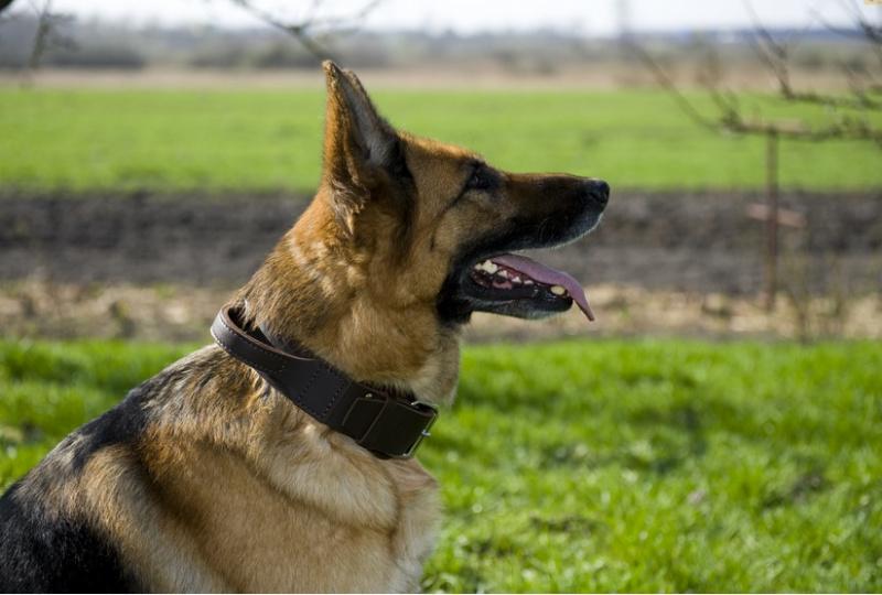 Platus odinis antkaklis šunims 5,0*65cm